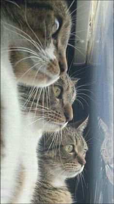 Ideas For Funny Cats Gatti Divertenti Cool Cats, I Love Cats, Crazy Cats, Pretty Cats, Beautiful Cats, Animals Beautiful, Kittens Cutest, Cats And Kittens, Animals And Pets