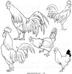 Clip Art Vector of a Digital Collage of Rooster Outline Designs