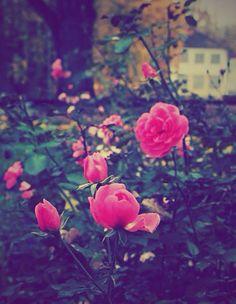 Flowers..flowers