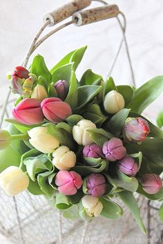 tulips to welcome spring My Flower, Fresh Flowers, Spring Flowers, Beautiful Flowers, Spring Bouquet, Tulips Flowers, Spring Blooms, Deco Floral, Arte Floral