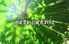 Bucket list- Check! Monteverde, Costa Rica, I ziplined through that too! Best experience ever!!
