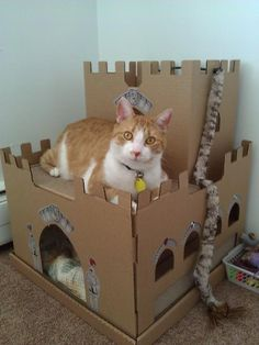 Cardboard cat Castle, I bought this for my cats and they had it destroyed in two weeks, but they had so much fun doing it that ima buy it again!