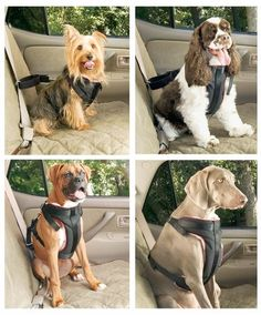 Itemship-pet Car Seat Belt - Retractable Leash - Large and Small Dogs Dog Chain Auto Insurance Deduction (S 3-11Kg) Itemship,http://www.amazon.com/dp/B00FVGVUJI/ref=cm_sw_r_pi_dp_Xf.ysb00GHP22ZE3