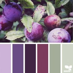 I am Jessica Colaluca, a creator of Design Seeds. A color and inspiration site, Design Seeds celebrate the colors found in nature and the aesthetic of purposeful living. Little did I know what a universal passion my love for color was. Purple Color Palettes, Nature Color Palette, Colour Pallette, Purple Palette, Purple Colors, Design Seeds, Bedroom Color Schemes, Colour Schemes, Bedroom Colors