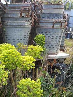 I've been seeing these everywhere lately.   atelierdecampagneantiques.blogspot.com  Olive picking buckets