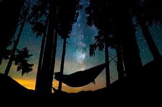 Let's go outside and set up some hammocks and watch the stars shimmer. Easily one of my favourite places I've ever slept except for the gnarly tree ants who wanted a bite of me early in the morning!  by @itsnathanchan (British Columbia Canada) Tag #Trevellers to be featured! by trevellers