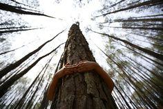contact avec les arbres