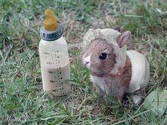 el conejito es muy lindo y es bebe son animales bueno ya se que soy alergica al pelo de los animales pero igual me gustan