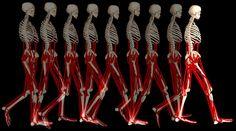 Quantifying the Human Body
