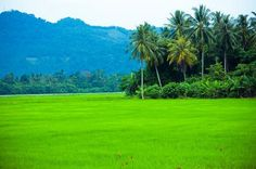 Private Half-Day Tour: Village Lifestyle at Balik Pulau Join this private half-day Balik Pulau experience tour, with an opportunity to break free from the busy lifestyle in a city. Enjoy and spend some quality time with your family at a place set among green rice paddy fields and fruit plantations in a peaceful village. You will learn and experience some local activities, such as making cold powder and nutmeg products. We will visit an organic farm and taste some authentic loc...