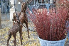 red-bud-pussy-willow-twigs.jpg
