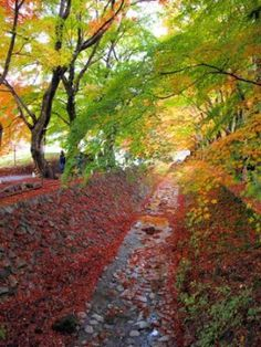 30 Best Photos of Mt. Fuji & Lake Kawaguchi Autumn Color Festival - Tokyo Direct Diary