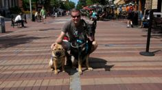 Burlington, Vermont is loaded with dog friendly options, from the waterfront, to Battery Park, to shops and restaurants on Church Street. And then ... there's Ben  Jerry's! Find more pet friendly places to stay and things to do in Burlington here: http://www.gopetfriendly.com/browse/united-states/vermont/burlington