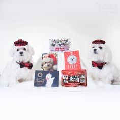 🤗Sharing some pawsome friends xmas cards! I feel our parents spent a lot of time on our cards compared to theirs! lol...look how cute we all are😆💕... Btw, this moring we checked the post office and we still haven't received the other incoming cards... 🤔 Maybe we should send our xmas cards one month early? or we should have a pigeon🕊 or owl to send the card for us! ・・・ #pawsome #pawfriends @kathiconway @lil_boo716 @capucinethequeen @angel_and_bailey #christmascard