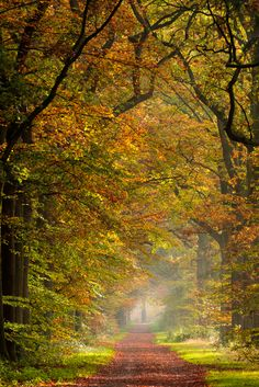 All Nature, Science And Nature, Peaceful Places, Beautiful Places, Forest Path, Autumn Scenes, Tree Leaves, Pathways, Cool Photos