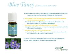 Blue Tansy (Tanacetum annuum) essential oil is steam distilled from the flowering plant and has a slightly sweet, herbaceous aroma. It is often used in the making of perfume.