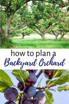 Planning Your Backyard Orchard - - Planning Your Backyard Orchard Garden Ideas & DIY Wanting to grow fruit in your own backyard? Here is how to plan your backyard orchard for your suburban yard or small homestead. Fruit Tree Garden, Garden Trees, Organic Gardening, Gardening Tips, Vegetable Gardening, Container Gardening, Veggie Gardens, Indoor Gardening, Orchard Design