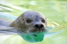 ¡Feliz Día del Medio Ambiente! En Faunia colaboramos donando parte de los ingresos de los Baños de Osos Marinos