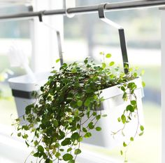 GRUNDTAL rail and PET plastic containers can turn any plant into a hanging plant.