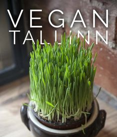 All the best vegan restaurants in Tallinn! This list is a must for anyone searching vegan meal in the lovely capital of Estonia. Best Vegan Restaurants, Great Restaurants, Places To Eat Breakfast, Meatless Burgers, Estonia Travel, Vegetarian Menu, Cozy Cafe, Food Spot, Vegan Curry
