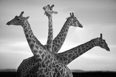 African wildlife photography by David Gulden – in pictures