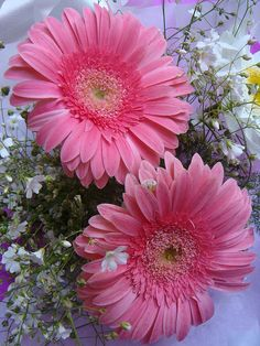 ~~ Two of one kind by Parvin ♣ ~ pink gerber daisies~~