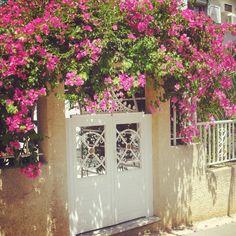 Door in Spring from @ssool on Piictu