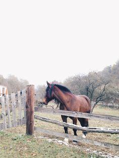 Czech Republic, horse