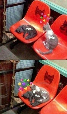 funny love memes for him & funny love quotes ; funny love quotes for boyfriend ; funny love memes for him ; funny love quotes for husband ; funny love quotes for him Cute Love Memes, Funny Love, New Memes, Funny Memes, Funniest Memes, Cartoon Memes, Memes Humor, Funny Cats, Funny Animals
