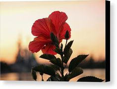 Sunset Canvas Print featuring the photograph Sunset Flower by Cynthia Guinn