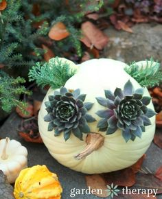 White pumpkin and succulent owl