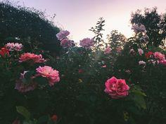 www.instagram.com/leaberphotos