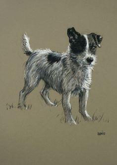 Beautiful Jack Russell Terrier dog LE fine art print 'Mr Alert' from an original chalk and charcoal sketch via Etsy.
