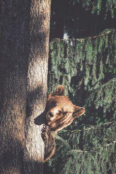 lsleofskye:  Peek-a-boo