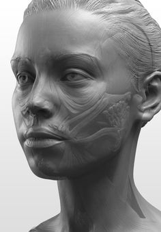 """Anatomy of the Head Series"": The highly detailed sculptures in the link were done entirely in #ZBrush by New Masters Academy Cofounders Eric Michael Wilson and Joshua Jacobo. http://zbru.sh/fa"