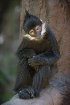 monkeys monkeytattoo monkey monkey🐒 monkeyclimber photographer photography travelphotography nationalgeographic nicepic animals animalovers an animal Nature Animals, Animals And Pets, Baby Animals, Funny Animals, Cute Animals, Strange Animals, Wild Animals, Primates, Mammals