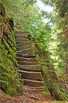 stairways, stairs, steppin Stones, forest
