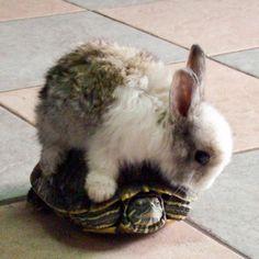 The Rabbit on the Tortoise