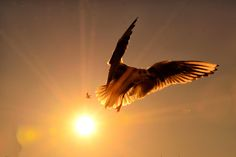 Seagull on the sun by Julien Delfosse on 500px