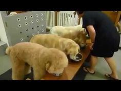 Amen! Dogs pray before they eat in China VIDEO - visit website to watch