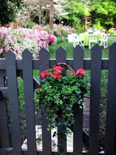 The charcoal gray picket fence features a hanging basket filled with ivy and brightly colored geraniums. The color of the geraniums pops against the fence and is carried through to the backyard. Design by Virginia Rockwell Hanging Plants, Garden Design, Plants, Garden Gates, Cottage Garden, Geraniums, Diy Planters, Outdoor Gardens, Fence