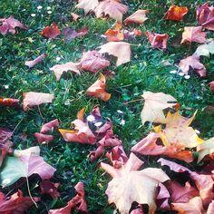 Herbst? Pah nicht mit mir! Ich blühe wann ich will! - Gänseblümchen  XD #herbst #fall #autumn #spring #daisy #gänseblümchen #keinherbst