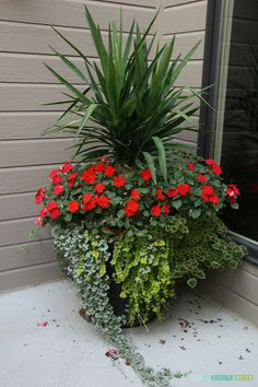 A gorgeous summer planter with yucca, impatiens, coleus and creeping jenny. So many other beautiful container gardening ideas in this post! Container Herb Garden, Container Gardening Vegetables, Container Flowers, Flower Planters, Flower Pots, Full Sun Container Plants, Succulent Containers, Outdoor Planters, Garden Planters