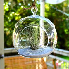 Really digging these hanging terrariums-- Argentea Air Plant Hanging Terrarium Kit | Air Plant Design Studio