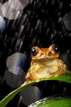Frog likes the rain.