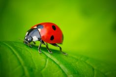 Ladybug & Leaf by seecreateimages on 500px