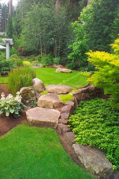 "Even the large stone stairs seem to ""spill"" from an upper lawn to a lower one, as water would spill between ponds, in this scene from the upper, walking garden in this otherwise small suburban backyard east of Seattle. Imagine the boulders as pondside platforms and the Japanese Bloodgrass as cattails in this Zen-like interpretation of a traditional Japanese rock garden."