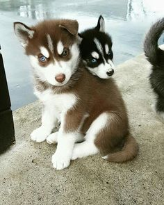 Cute on Cute! <3                                                                                                                                                                                 More