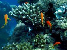 ecosistema-marino-mexico
