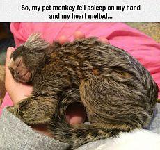 Итак, моя домашняя обезьяна уснула у меастаяло... / Неформальный Английский